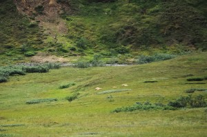 3 brown bears sleeping on a hill