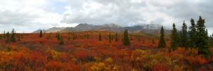 Autumn colors on the Denali Park Road