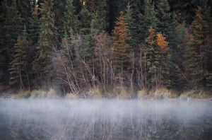 fog over ballaine lake under bare trees