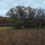 Trees by the wetlands trail at Creamer's Field