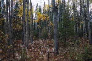boreal scenery