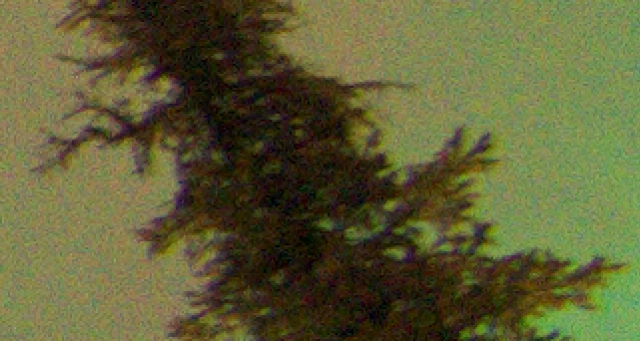 You can see some magentas around the edges of the trees. This is actually a really small amount, and I don't really feel the need to fix it in this case (the results might not be great anyway), but I'll do it here to show how.