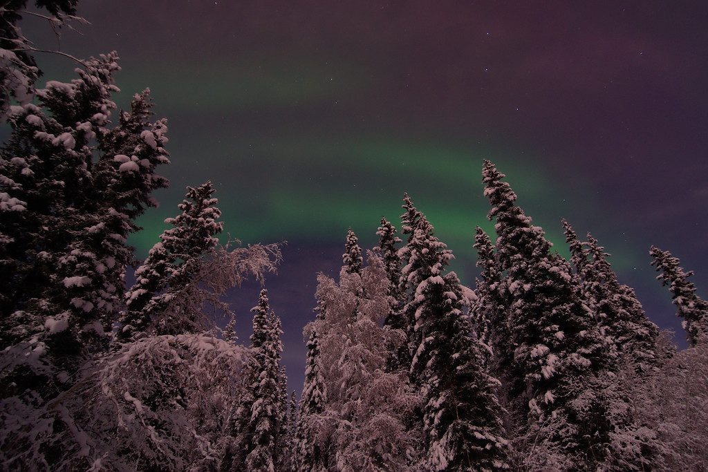 A bit of aurora shortly before the clouds rolled in - trees illuminated by the moon.