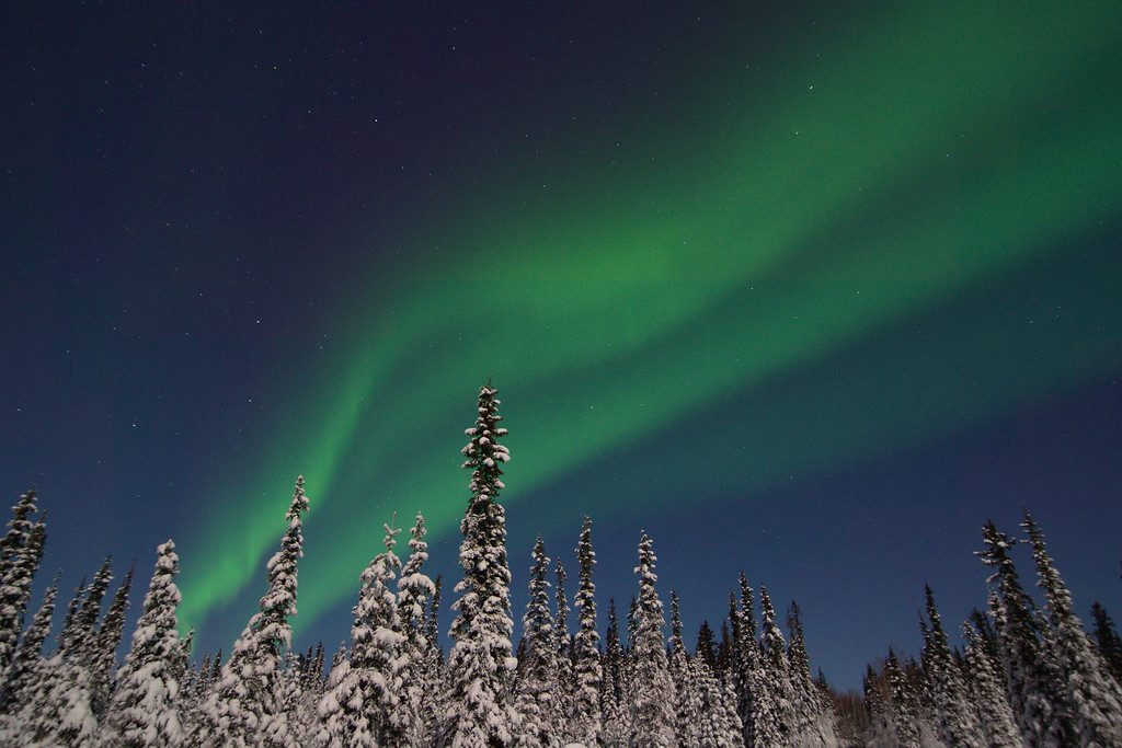 Aurora borealis over a moonlit and snow-covered boreal forest in Fairbanks, Alaska.