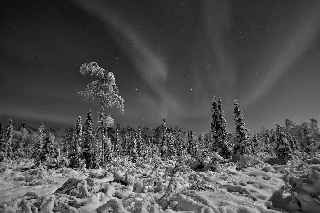Aurora Landscape in Black and White. A gorgeous moonlit boreal forest in Fairbanks under a sky filled with aurora.