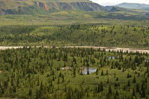 Looking over the landscape of Lower Miller Creek in the Alaska Range