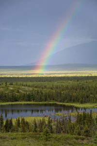 A bright rainbow in the Donnelly Flats just north of the Alaska Range.