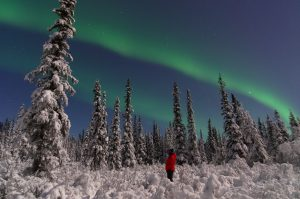 Person watching the northern lights in a snow-covered boreal forest.
