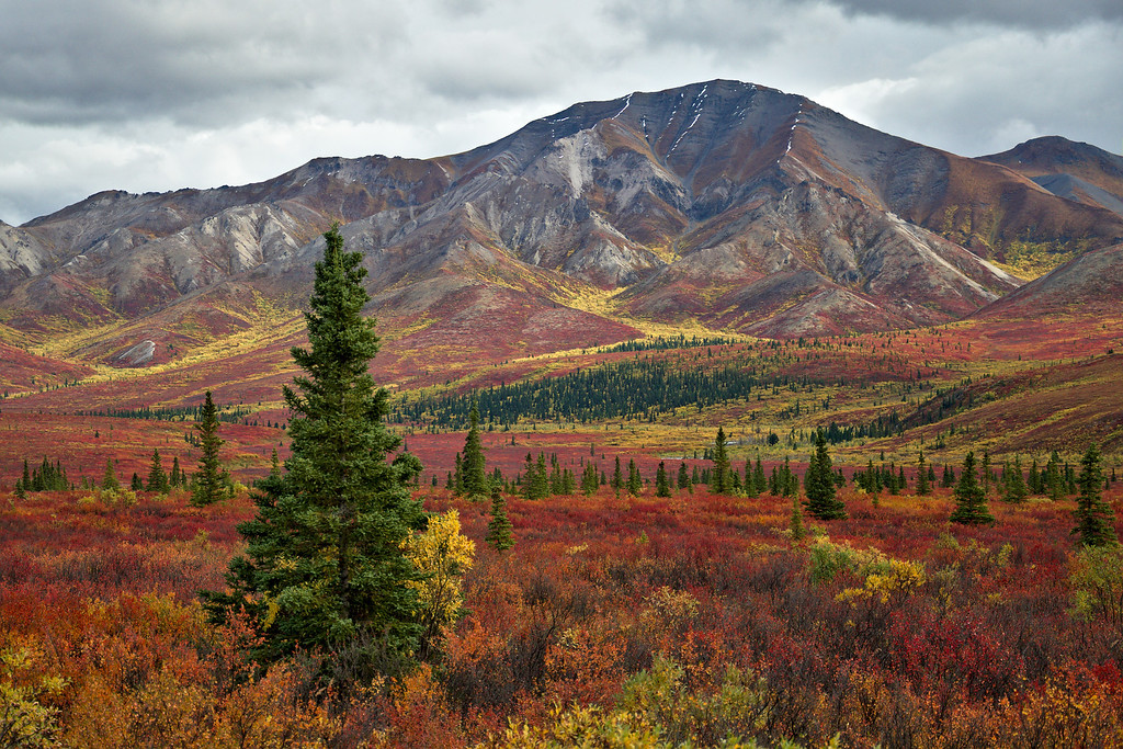 Autumn colors in tundra in Denali National Park