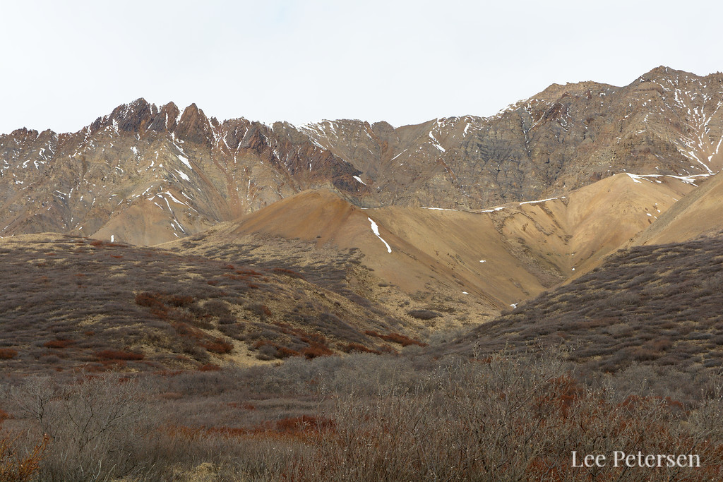 The Polychrome Mountains on the north side of the Park Road in Denali National Park