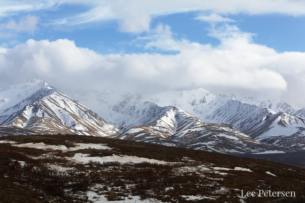 Blue sky over the Alaska Range from a ridge near Polychrome Pass in Denali National Park