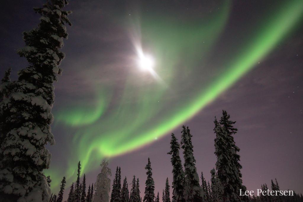 Aurora borealis and moon over a forest near Fairbanks Alaska