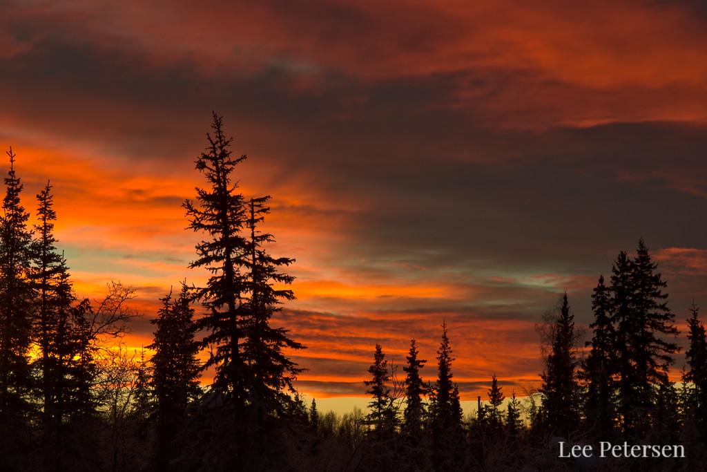 Orange sunrise over a silhouette of a boreal forest