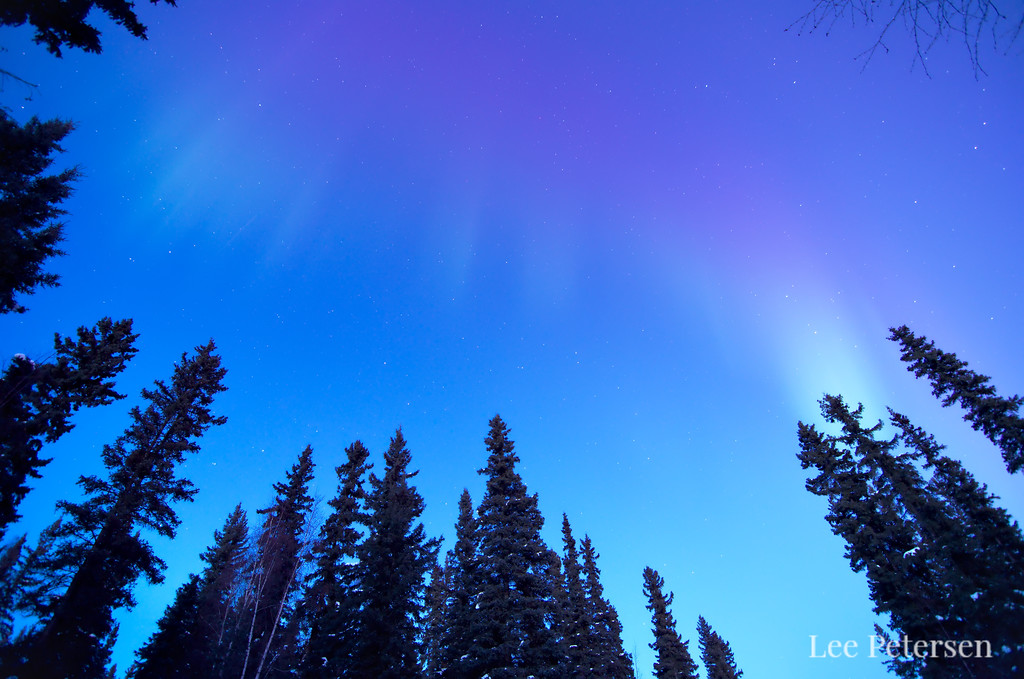 aurora borealis in twilight over a forest