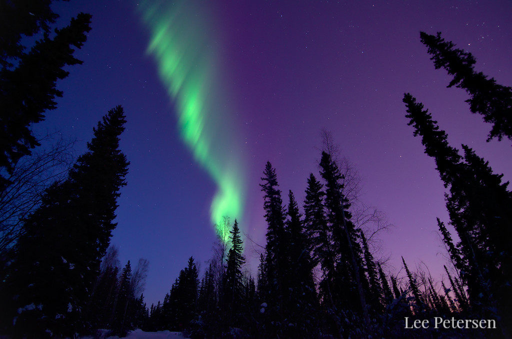 Northern Lights over silhouetted forest