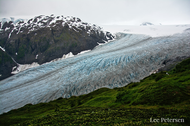 Exit Glacier and Meadows leading up into the Harding Icefield