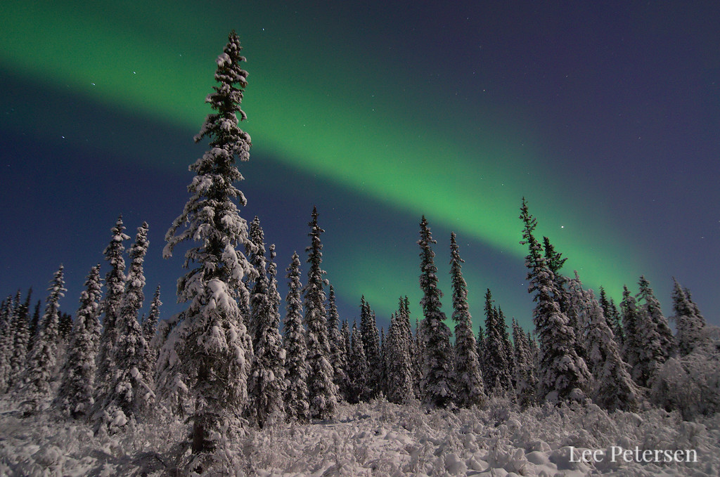 aurora borealis over snowy forest
