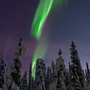 Aurora borealis over snow-covered spruce trees